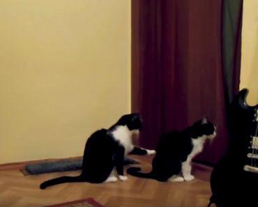 Polite Kitty Tries To Apologize His Friend!