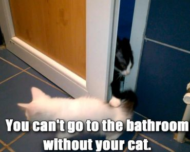 Signs That Your Cat Owns You!