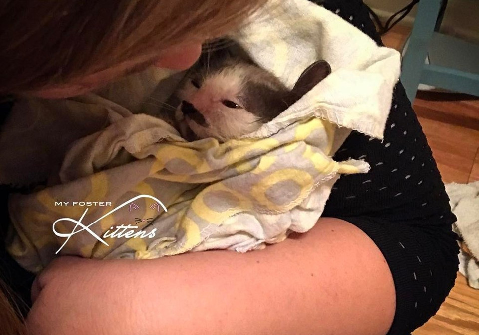 Kind Hearted Woman Refuses To Give Up At A Sick Kitten