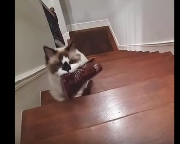 Cat Delivers Her Own Bag Of Treats To Be Fed!