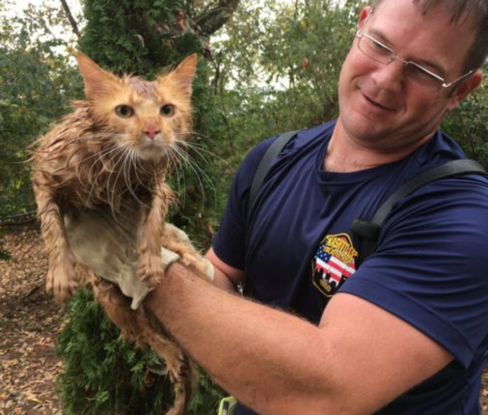 Cat Jumped Off The Roof And Landed In A Storm Pipe…
