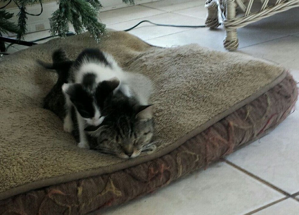 Cat Went Outside To Play And Came Home With A Kitten