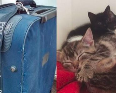 She Was Walking Her Dog When She Found An Old Abandoned Suitcase. When She Looked Inside…