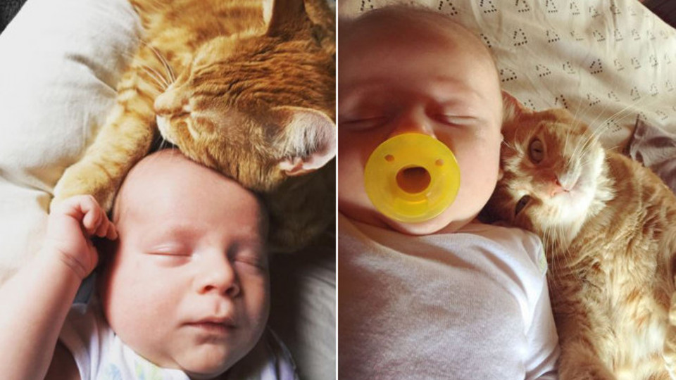 Family's Newborn Baby And Their Cat Are Now Best Friends!