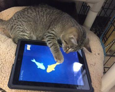 Regina Humane Society Introduces iPads For Cats Program!