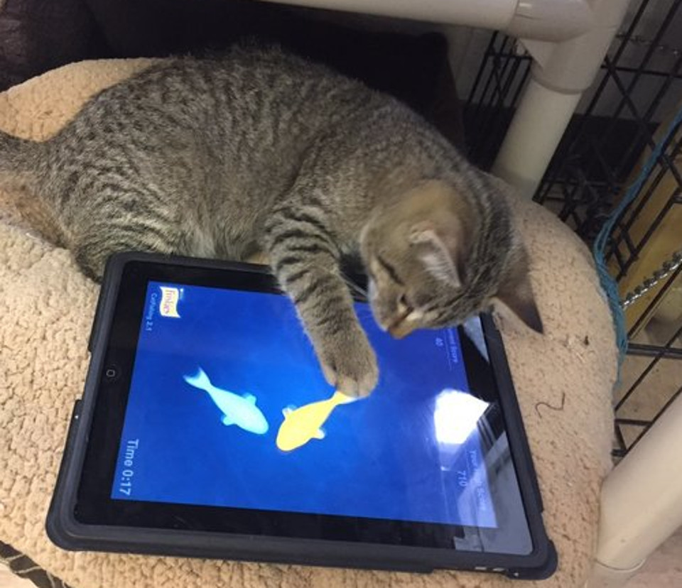 Regina Humane Society Introduces iPads For Cats Program!