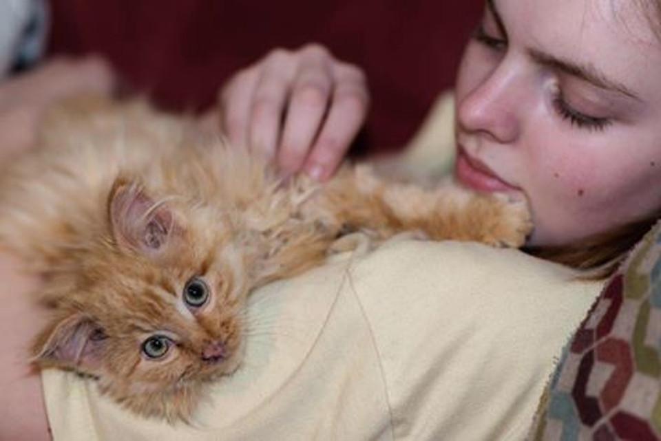 Kitten almost frozen rescued