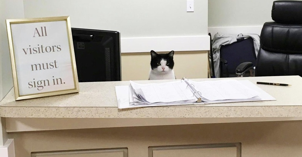 Cat Wanted To Become A Volunteer At A Nursing Home!