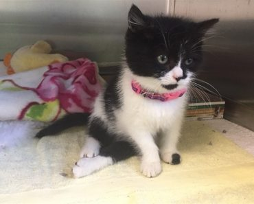 Paralyzed Kitten Takes First Steps!