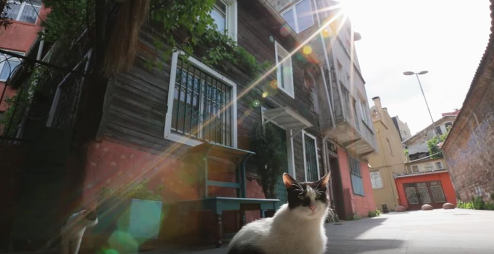 The Famous Cats of Istanbul!