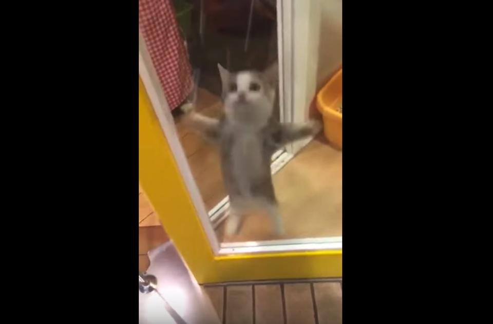 This Cat Has An Adorable Reaction When His Owner Comes Home!