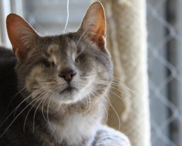 14 Years Old Blind Cat Abandoned By Owners Started A New Life