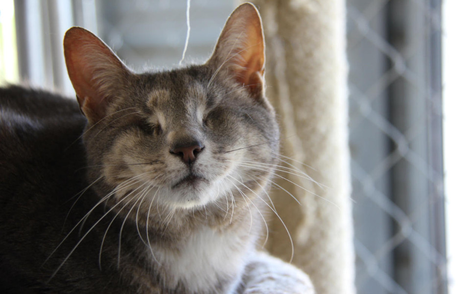 14 Years Old Blind Cat Abandoned By Owners Started