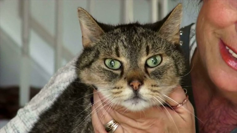 16-Year-Old Cat Returns Home After 2 Years