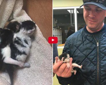 Firefighters Bottle Feed Newborn Kittens Found Inside Engine Of Truck!