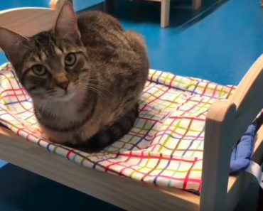 Shelter Cats Curl Up on Donated IKEA Beds!