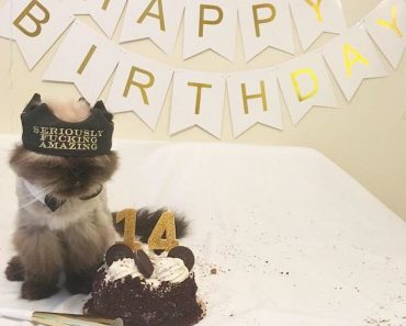 13 Years Old Cat Abandoned By Owner Gets The Best Birthday Ever
