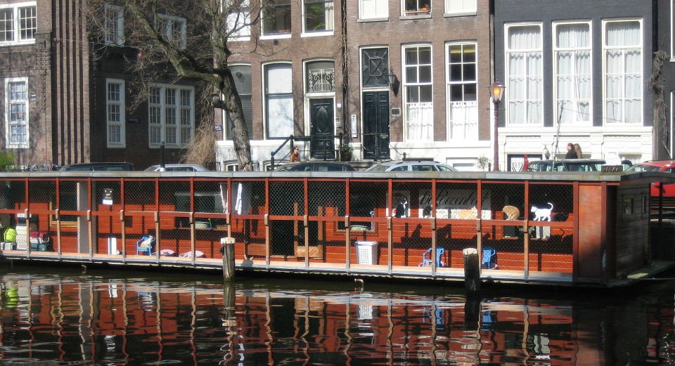 Amsterdam's Floating Sanctuary for Cats – The Cat Boat