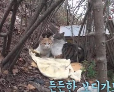 Bodyguard Kitty Protects His Disabled Friend