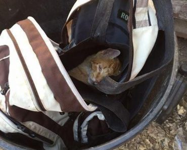 Cat Found in Backpack In The Garbage Can Is Rescued