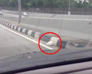 Man Saves Cat From Middle Of Busy Highway
