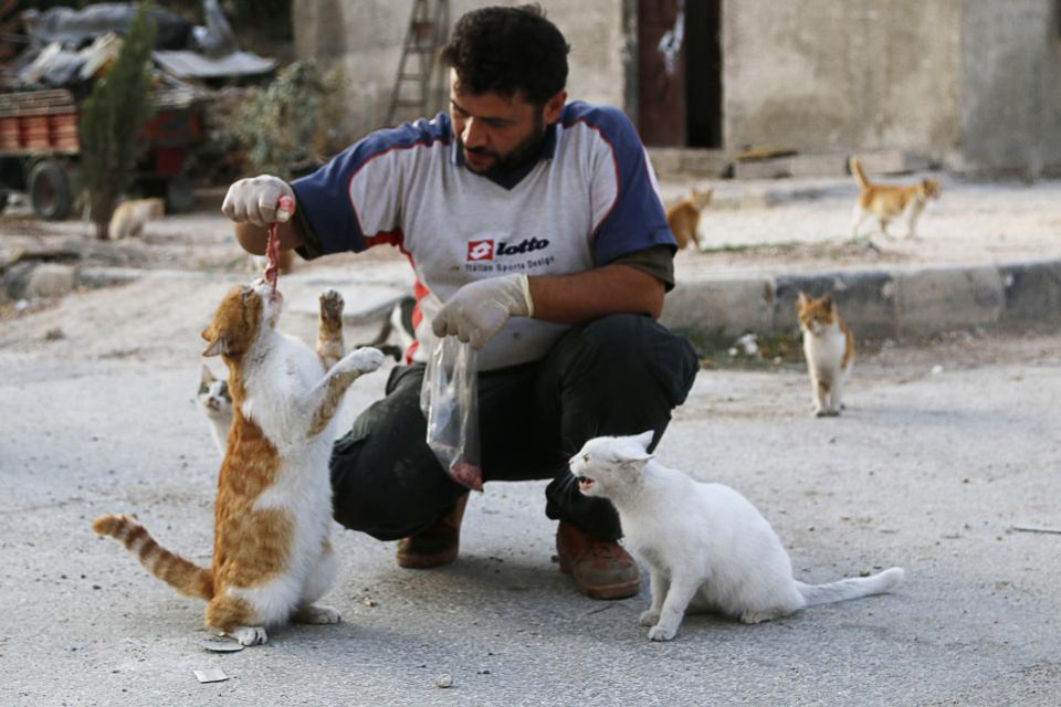 'Cat Man of Aleppo' Forced to Start Again, From Scratch…