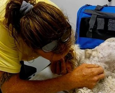 Emotional Reunion When Man Found His 20-Year-Old Deaf And Blind Cat
