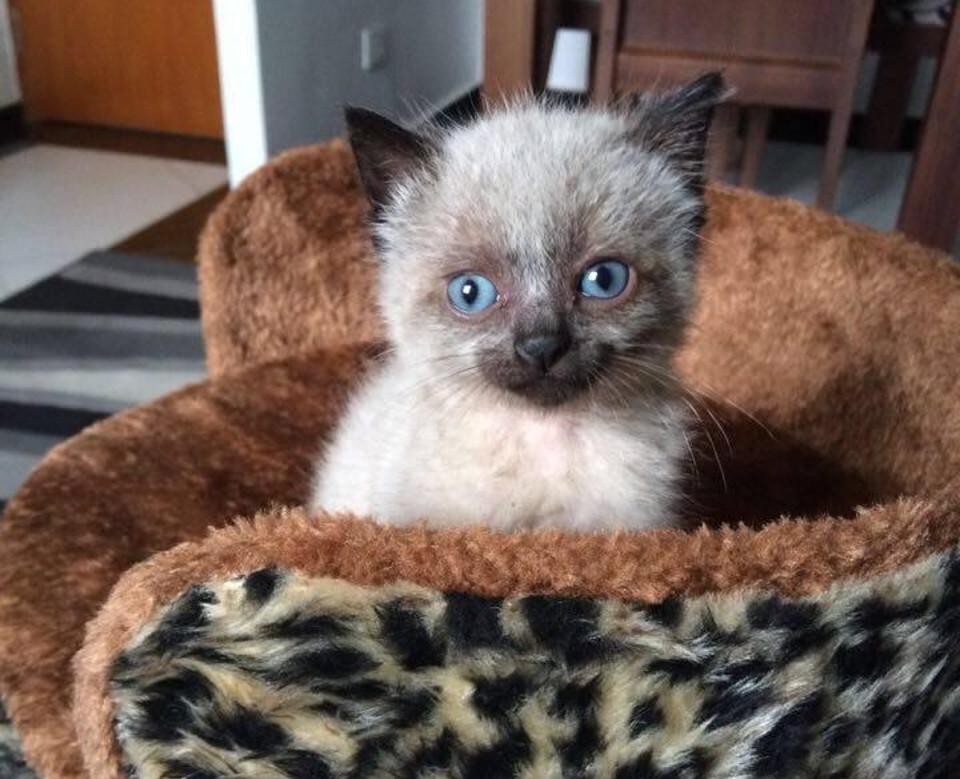 Kitten Fred