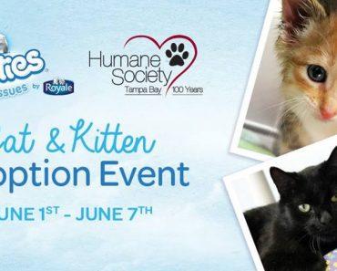 Free Cats And Kittens At Humane Society of Tampa Bay!