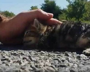 Kitten Was Found Half-Dead On the Road, But A Miracle Happened