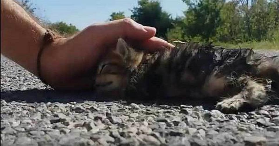smelly cat smelly cat