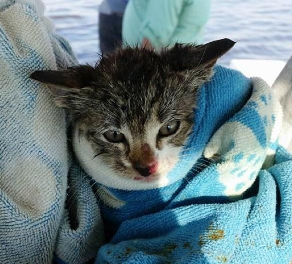 Kitten rescued from drowning