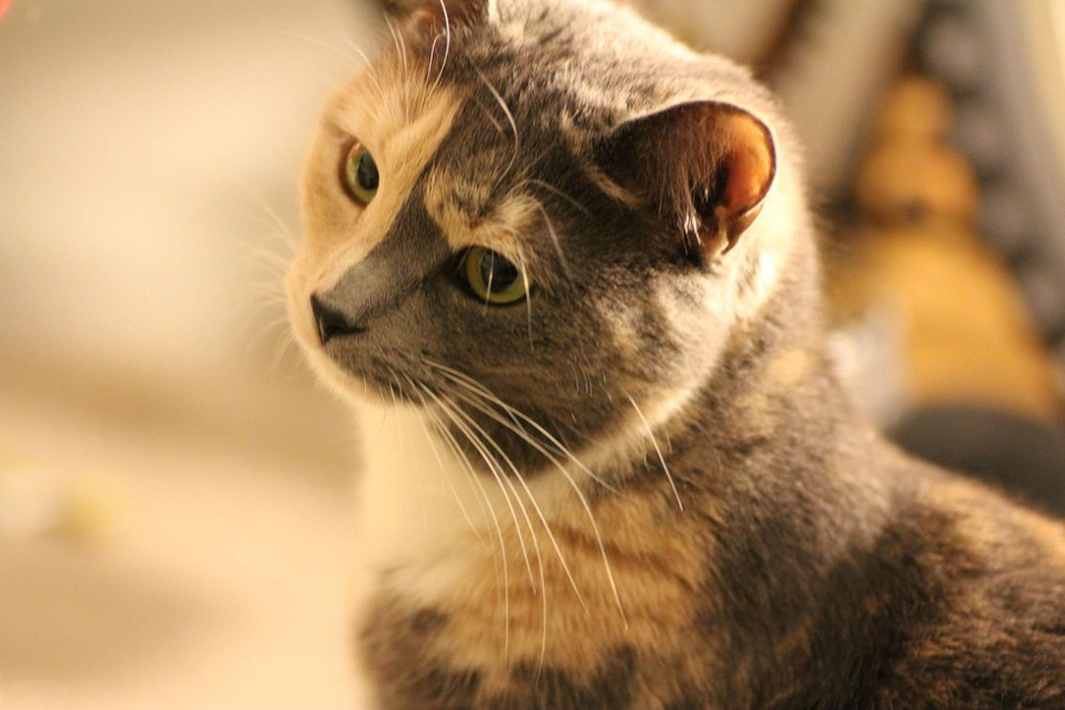 cat chose human