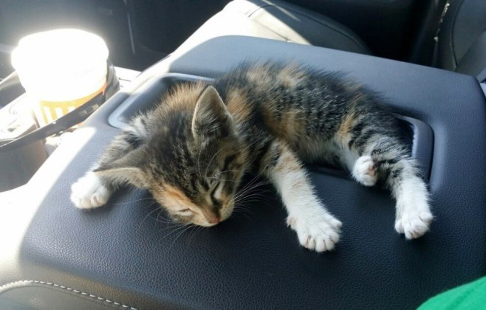 Kitten rescued from the roadside