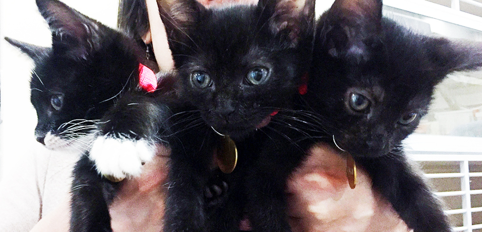 Kittens fom trash