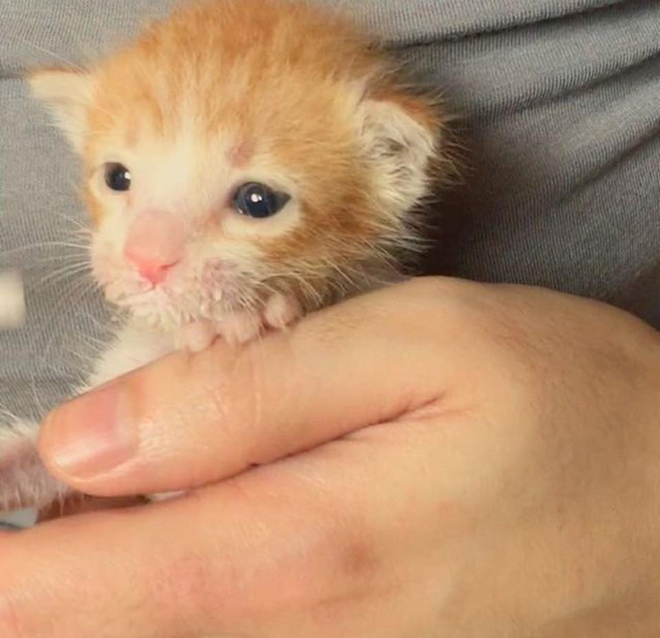 Kitten getting stronger
