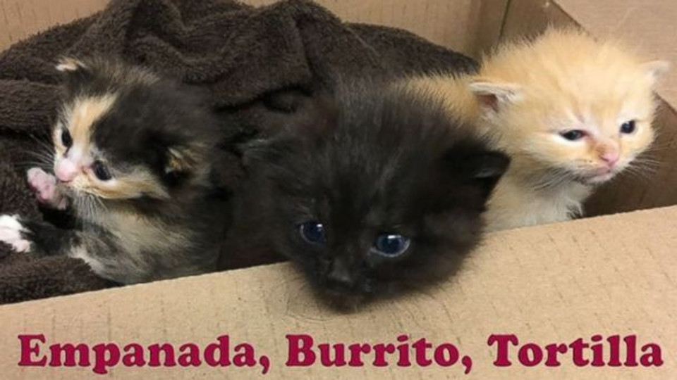 Burrito siblings