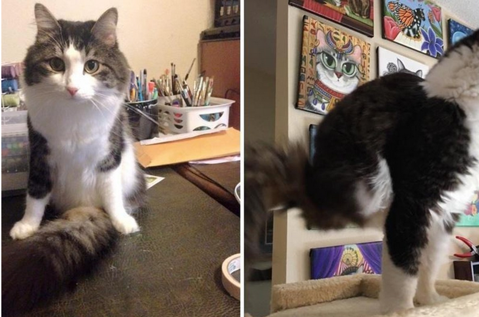 Cat Born with Two Legs Uses His Fluffy Tail to Walk and It's Amazing