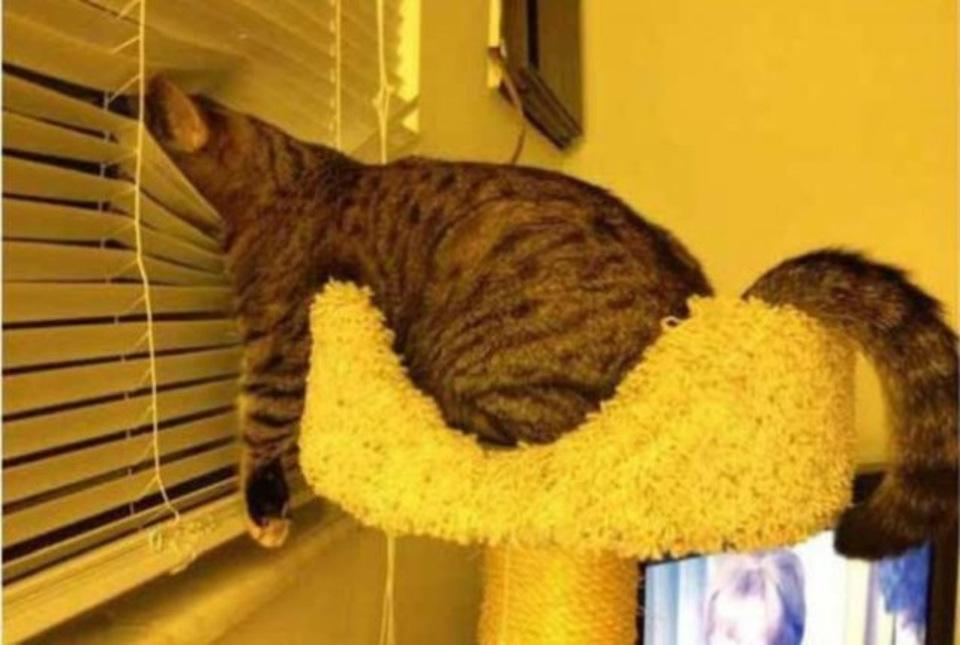 Cat sleeps funny