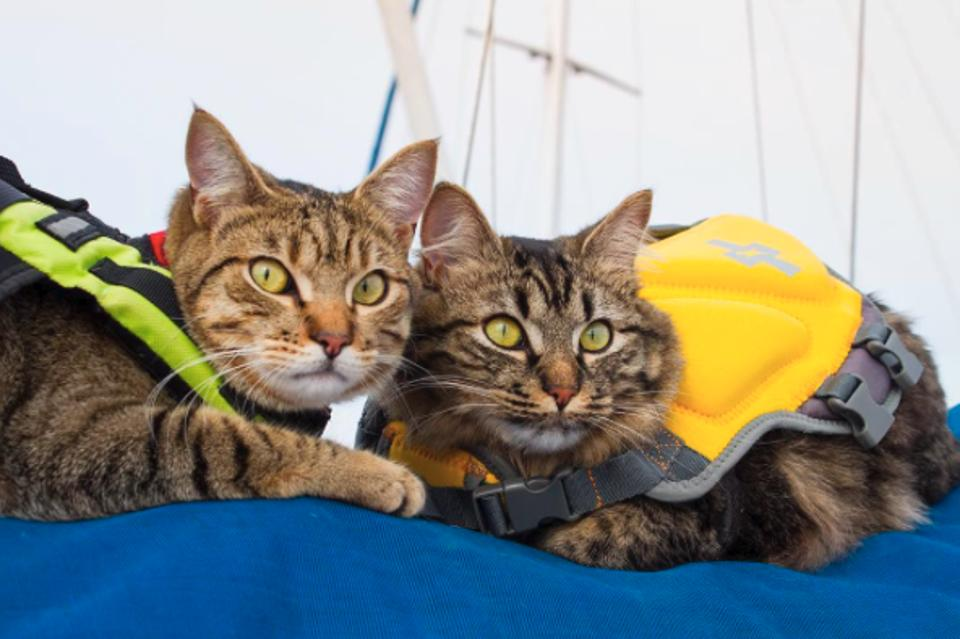 Cats adventures