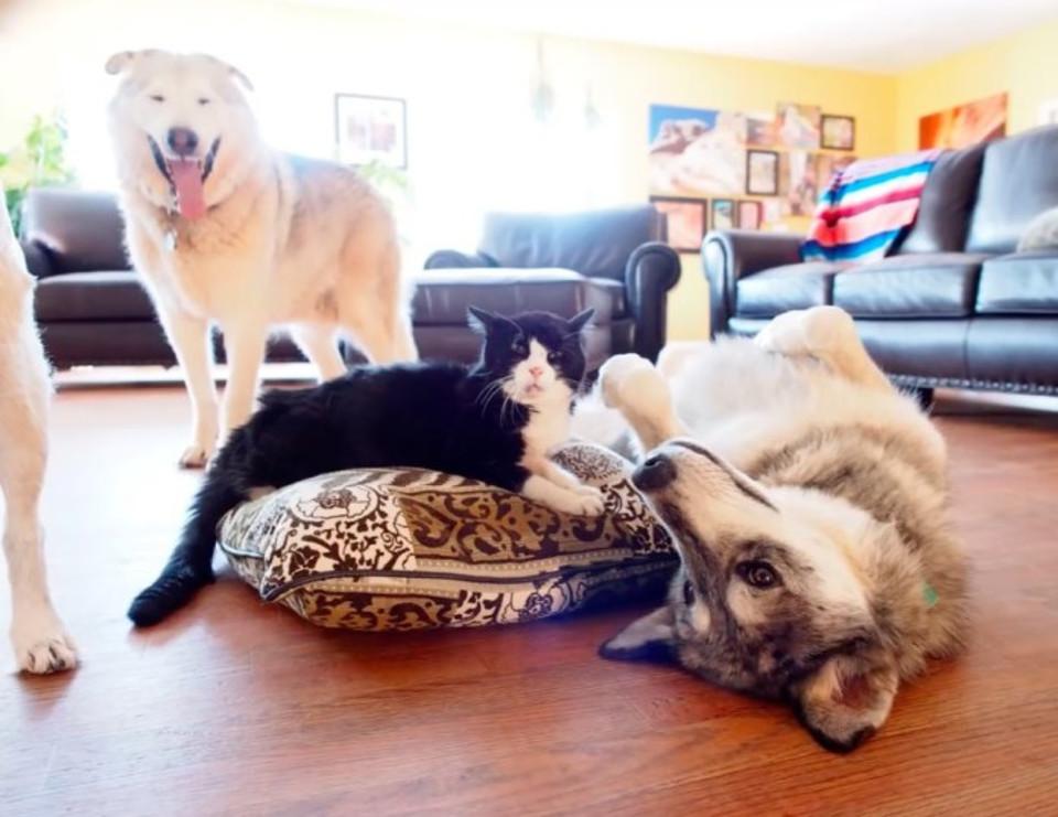 Dexter and friends