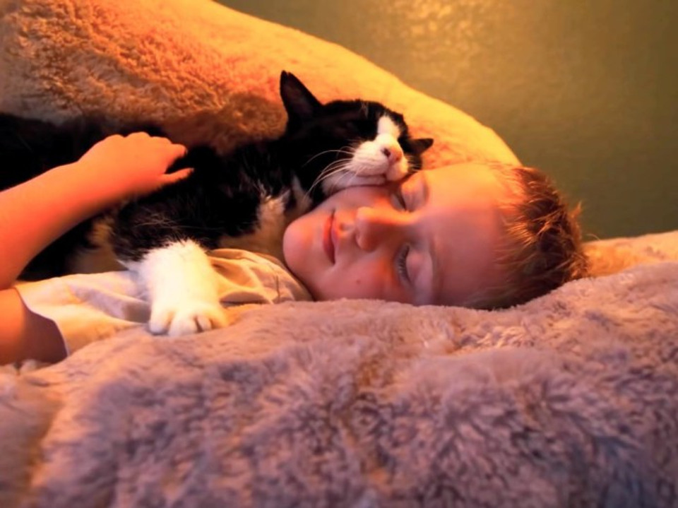 Family Adopted a 20 Year Old Cat From Shelter  And Made The Last Part Of His Life The Happiest