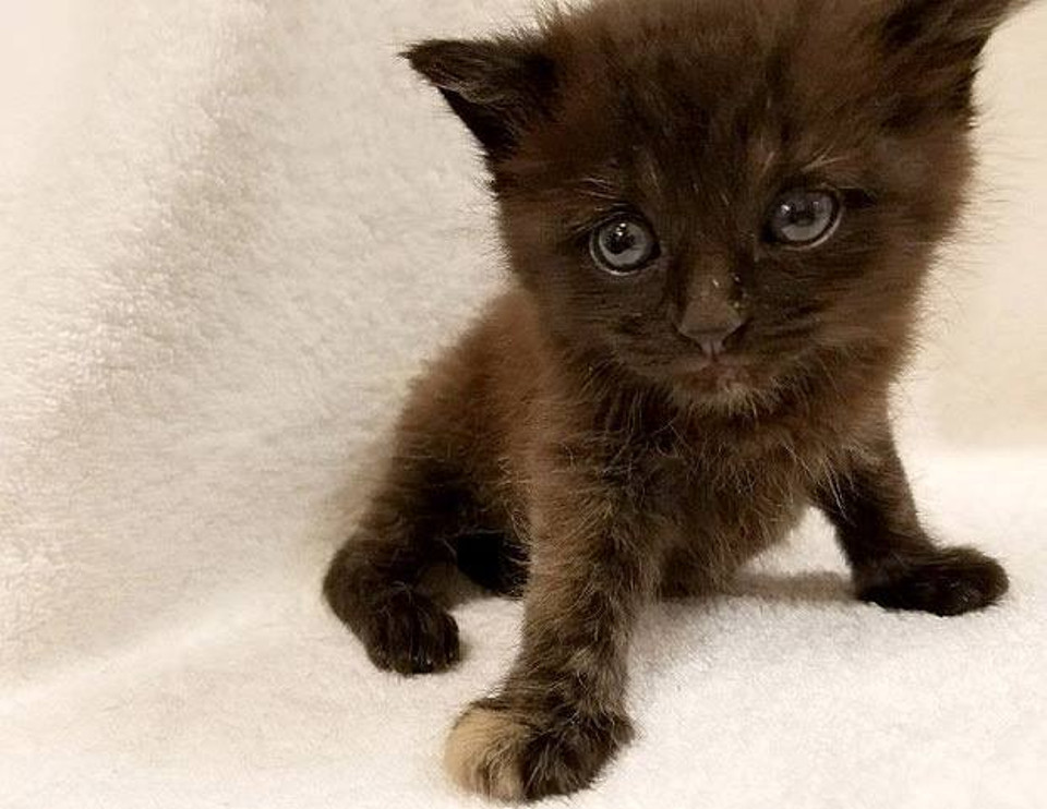 Hundreds Want To Adopt a Rare Kitten Named Burrito!