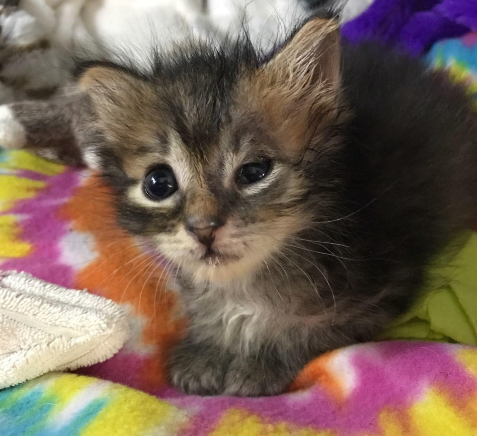 kitten nursed back to health