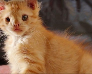 Kitten Rejected Because He Was Considered 'Ugly', Found True Love