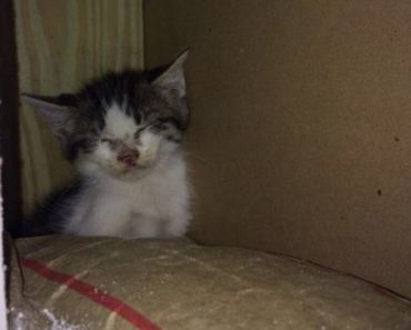 Kitten Trapped Inside A Wall Is Saved!
