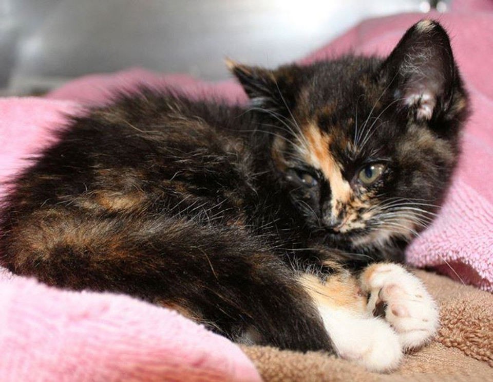 Kitten Shot Multiple Times With BB Gun In Polo Fields Neighborhood