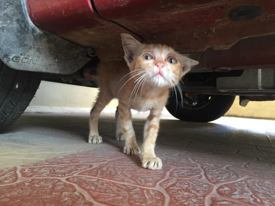 Desperate Kitten Was Crying For Help Underneath A Car. Six Months Later…