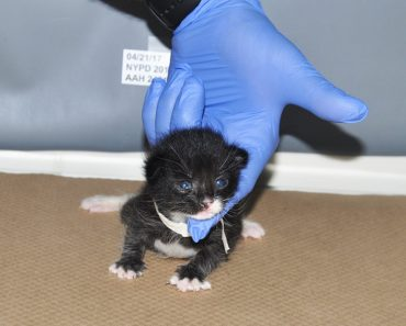 3 Kittens Found In A Garbage Bag After Someone Threw Them Out Like Trash