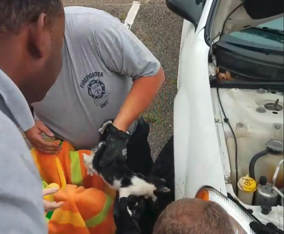 kitten trapped is rescued